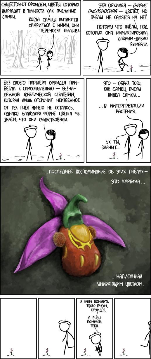 Пчелиная орхидея